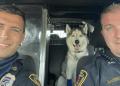 police rescue dog