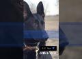 Missouri police K9